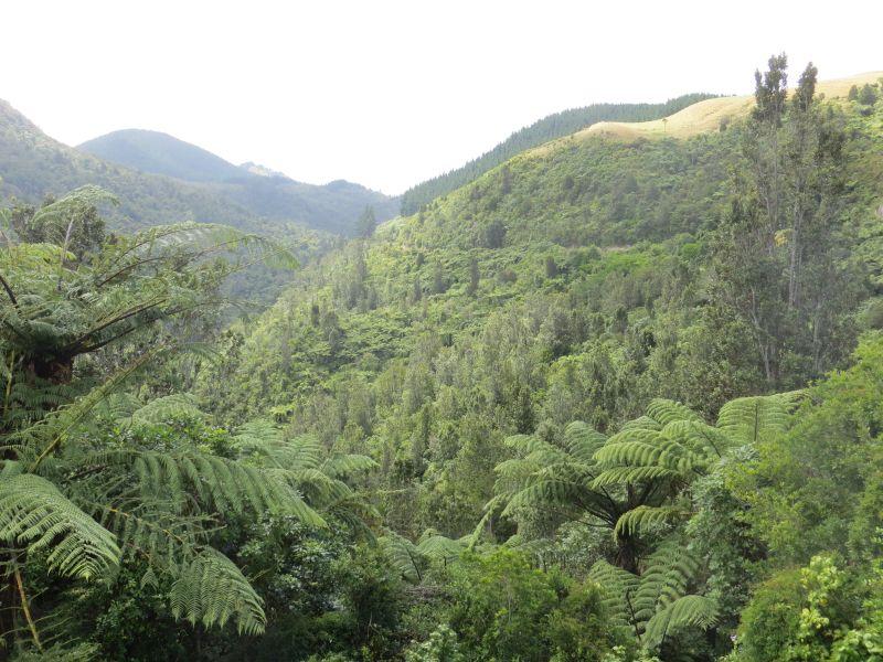 Neuseeland_2014_Tour_14_09