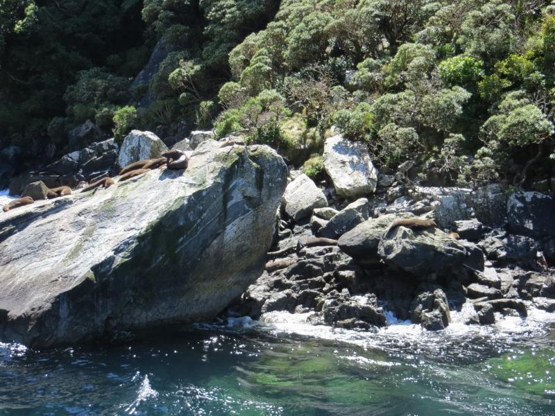 Neuseeland_2014_Tour_3_052