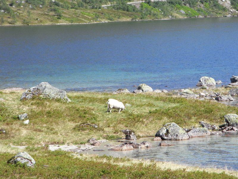 Jungsi - Norwegen 2010 444