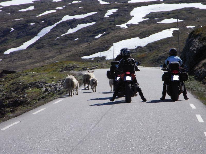 Jungsi - Norwegen 2010 490