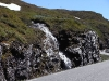 Jungsi - Norwegen 2010 484