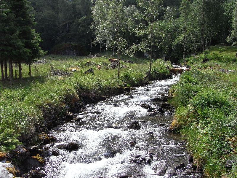 Jungsi - Norwegen 2010 268